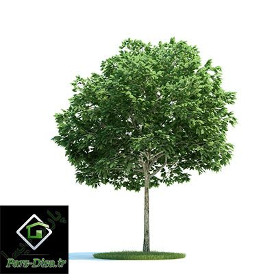 آبجکت درخت وی ری ArchModels tree Vray